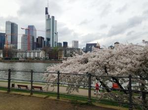 Frankfurt y sus cerezos